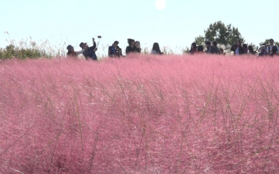 [Video] Autumn blooms in pink nationwide