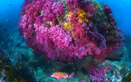 [Photo News] Jeju Munseom named 'most beautiful underwater district'
