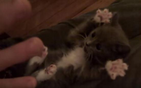 (영상) 간질간질 까꿍! 고양이 입 벌고 '만세'