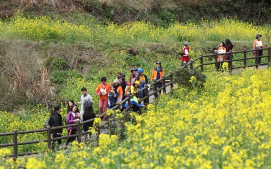 Seogwipo to hold annual canola walking festival