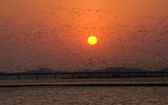 [Eye Plus] Migratory birds say adieu to S. Korea as spring arrives