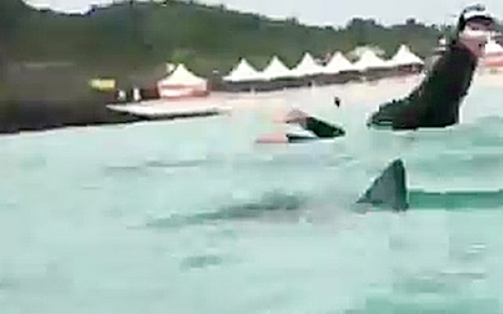 Jeju shark warning closes Hamdeok Beach