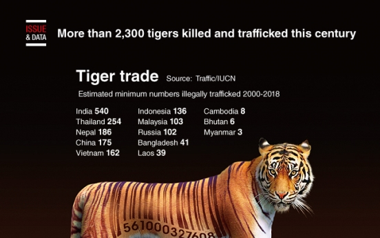 [Graphic News] More than 2,300 tigers killed and trafficked this century