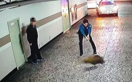 새벽녘 부산 주택가 멧돼지 집단출현…4마리 사살