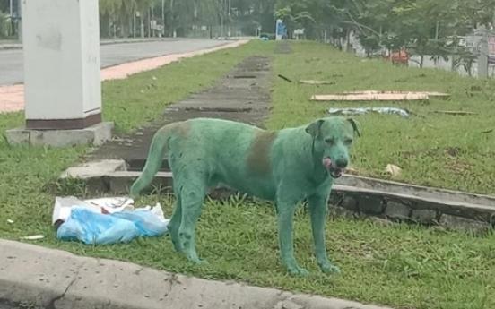 말레이서 녹색 페인트칠한 개 '충격'…동물 학대 비난
