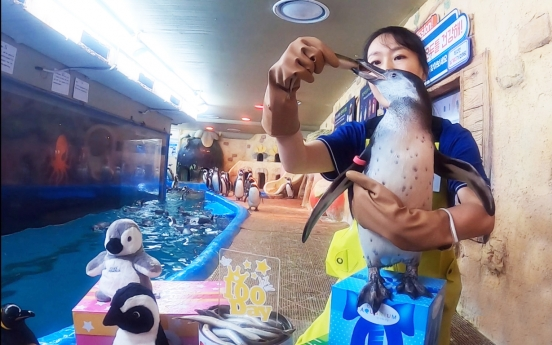 Coex Aquarium announces new rare penguin