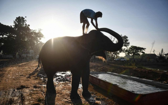 Elephants in Thailand 'broken' for lucrative animal tourism