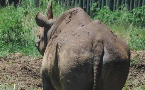 탄자니아서 57세 검은 코뿔소 죽어…'세계 최장수' 추정