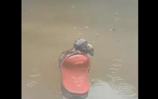 인도네시아 홍수에 쥐·바퀴벌레도 살겠다고 아등바등