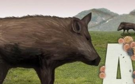 Korea reports 19 more wild boars infected with African swine fever
