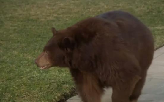 """도심에서 벗어나 자유를 즐기는 곰 """"포착"""""""