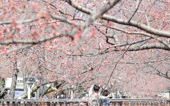 [Newsmaker] Spring flower festivals say 'No' to visitors