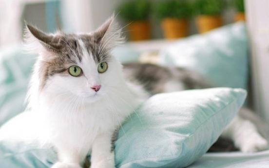 고양이 코로나19 양성,