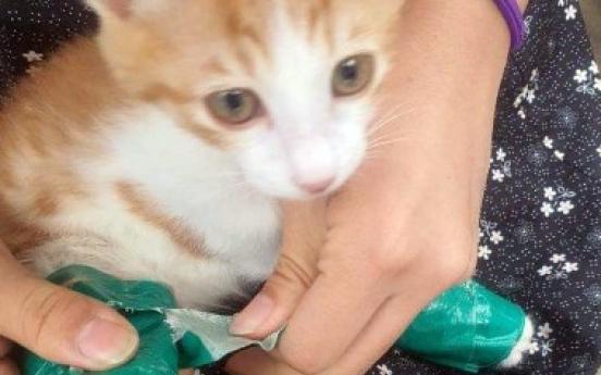 청테이프로 다리 꽁꽁 묶인 고양이…쓰레기 더미서 발견