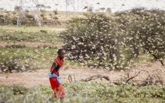 S. Korea to provide $4m in aid to 14 countries hit by locust swarms
