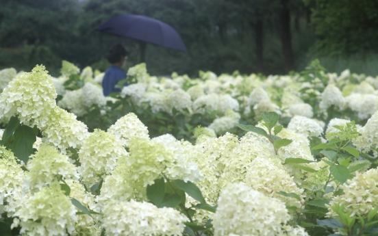 Jeju sees longest monsoon season on record