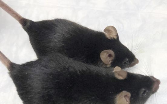 '마이티 마우스'…우주여행 갔던 쥐, 근육질돼 돌아왔다