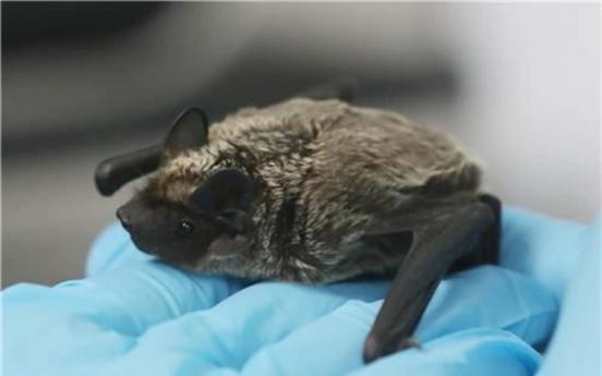 인천서 박쥐 목격담 잇따라…바이러스 전파 가능성은?