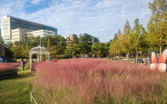 [Photo News] Pink muhly grass surrounds Pohang City Hall