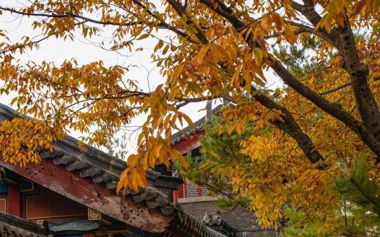 Fall is upon us: 'Color show' trails across Korea
