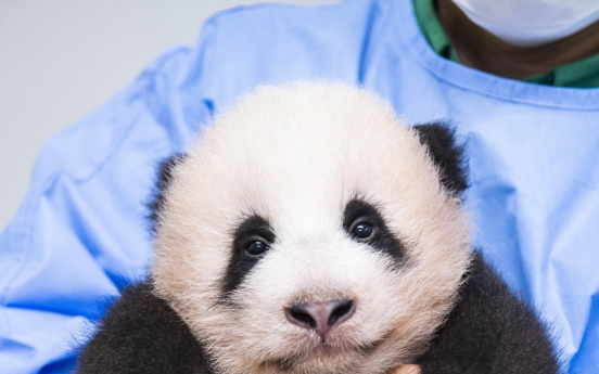 Korea's first panda cub named Fu Bao