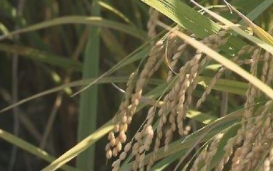 Rice output at half-century low in 2020 on bad weather