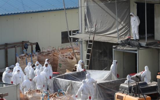 S. Korea confirms 4 more cases of bird flu, caseload now at 77