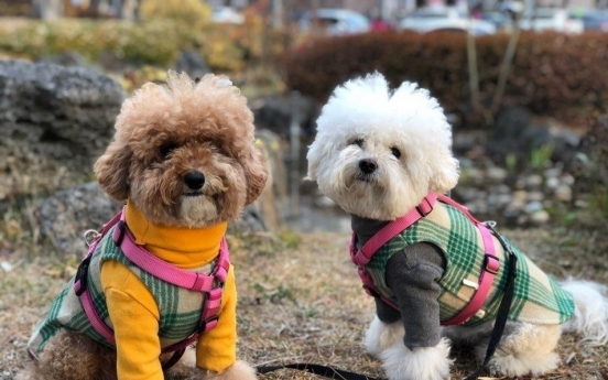 S. Korea implements tougher rules on animal abuse, pet owners
