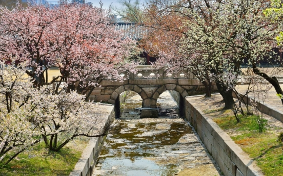 Spring flowers expected to bloom at Joseon royal palaces and tombs starting Sunday