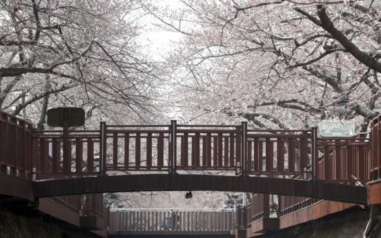 [Photo News] Spring, the season of flowers, blooms in Korea