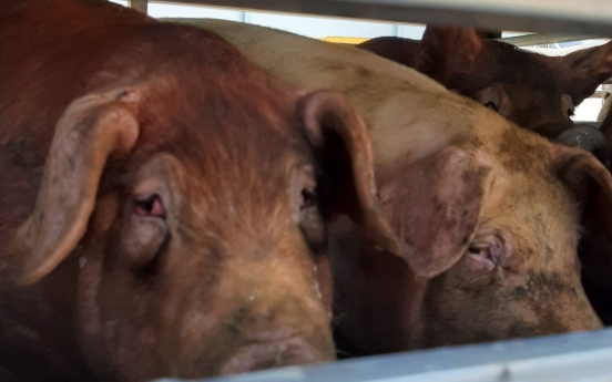 [Animals in Korea (4)] Why we should care about animal cruelty in farms