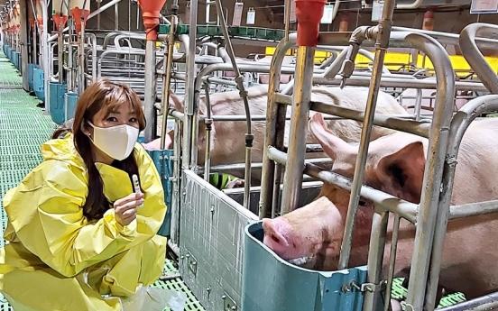 Local company develops smart livestock management solution for pigs