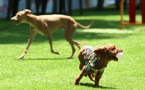 [Newsmaker] Justice ministry seeks to grant legal status to animals to enhance their welfare
