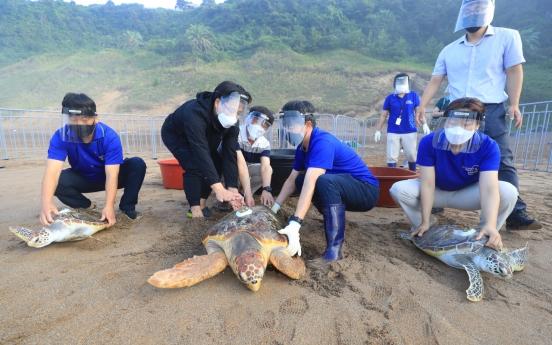 [Photo News] Sea Turtles Returning to Their Native Sea