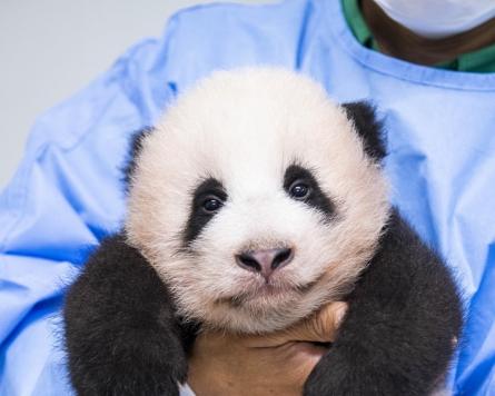 Korea's first panda cub named Fu Bao