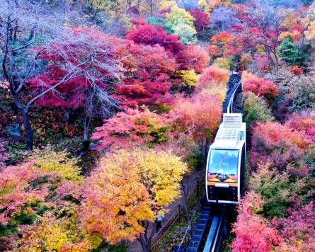 [Eye Plus] Autumn foliage at peak