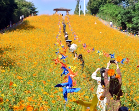 [Eye Plus] Fall flowers blooming at Seoul Olympic Park
