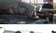 이번엔 괴물 민물고기…'엘리게이트 가아' 충격