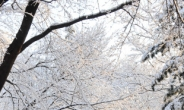<포토뉴스>벚꽃인지 봄 눈인지…