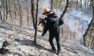 검게 탄 나무껍질-솔방울 하나로 산불 범인 잡는다