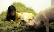 도올 딸 김미루, 104시간 동안 돼지와 '파격' 누드