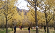 """[박인호의 전원별곡] 제5부 전원명당·명소 <1> 홍천 은행나무숲과 달둔산장 """"이 곳에 머물면 난 자연인이 된다"""""""