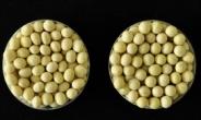 기계로 수확 가능한 장류용 콩 '선풍' 개발