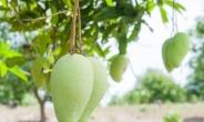 세계 각국의 영양만점 간식 8가지는…