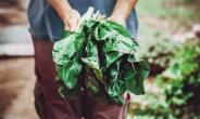 [aT와 함께하는 글로벌푸드 리포트] 식품로스 年 643만t…저감책 찾는 日정부