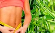 체지방 막아주는 '시서스' 대체 무엇?…'행복 호르몬' 다이어트 소재로 해외 인기