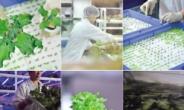 [aT와 함께하는 글로벌푸드 리포트] 경작지 부족한 홍콩 '수직농장' 대안으로 부상