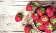 [aT와 함께하는 글로벌푸드 리포트] 신선 농식품 소비 느는 몽골, 한국산 딸기 인기