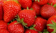 제철이 뭐지?…봄에도 이어지는 딸기 인기 [식탐]