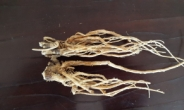 시호 추출물 이용 만성통증 치료 후보물질 개발